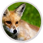 Fox Pup Round Beach Towel by Fabrizio Troiani