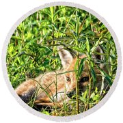 Red Fox Pup Hiding Round Beach Towel