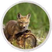 Fox Pup In The Morning Light Round Beach Towel