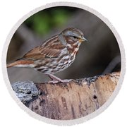 Fox Sparrow Pictures 16 Round Beach Towel