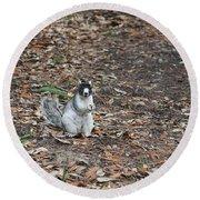 Fox Squirrel Curious Round Beach Towel