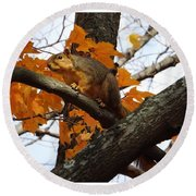 Fox Squirrel In Autumn Round Beach Towel