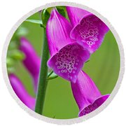 Foxglove Digitalis Purpurea Round Beach Towel
