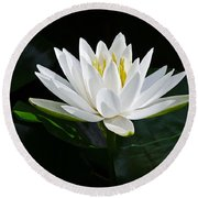 Fragrant Water-lily Round Beach Towel