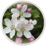 Framed Apple Blossom Round Beach Towel
