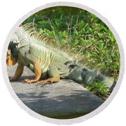 Framed Iguana Round Beach Towel