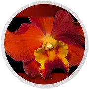 Framed Red Orchid  Round Beach Towel
