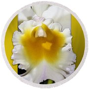 Framed White Orchid Round Beach Towel