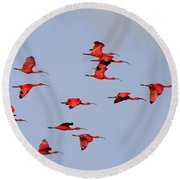 Frankly Scarlet Round Beach Towel by Tony Beck