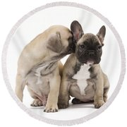 French Bulldog Puppies Round Beach Towel