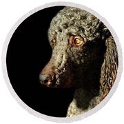French Poodle Standard Round Beach Towel by Diana Angstadt
