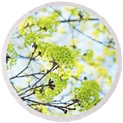 Fresh Spring Green Buds Round Beach Towel