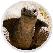 Friendly Tortoise Round Beach Towel