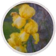 Friendly Yellow Irises Round Beach Towel