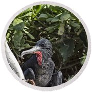 Frigate Bird- Hawaii V2 Round Beach Towel