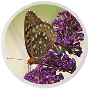 Fritillary Butterfly On Buddleia Round Beach Towel