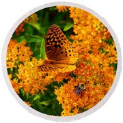 Fritillary On Butterfly Weed Round Beach Towel