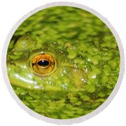 Frog In Single Celled Algae Round Beach Towel