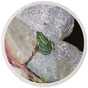 Frog On Rocks Round Beach Towel