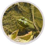 Frog Thinks He's Hidden Under A Twig Round Beach Towel