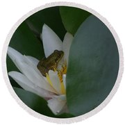 Frog Tucked In A Water Lily Round Beach Towel