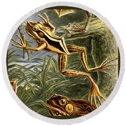 Frogs Detail Round Beach Towel