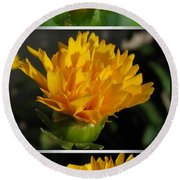 From Bud To Bloom - Coreopsis Named Early Sunrise Round Beach Towel