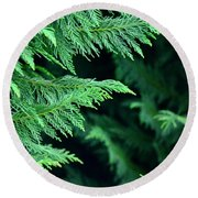 Fronds Of The Leyland Cypress Round Beach Towel