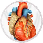 Front View Of Human Heart Round Beach Towel by Stocktrek Images