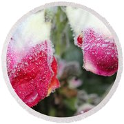 Frost Bears Down On Snapdragon Named Floral Showers Red And Yellow Bicolour Round Beach Towel