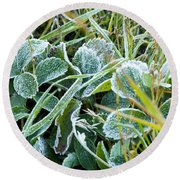 Frost On Strawberry Leaves Round Beach Towel