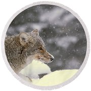 Frosty Coyote Round Beach Towel