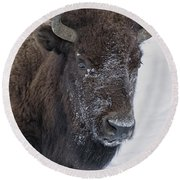 Frosty Morning Bison Round Beach Towel