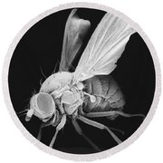 Fruit Fly Round Beach Towel