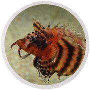 Fu Manchu Lionfish Round Beach Towel