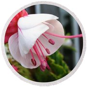 Fuchsia Named Liebelei Round Beach Towel