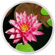 Fuchsia Pink Water Lilly Flower Floating In Pond Round Beach Towel
