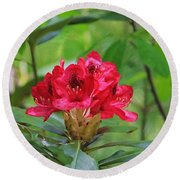 Fuchsia Rhododendron Moore State Park Round Beach Towel