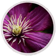 Full Bloom Clematis  Round Beach Towel