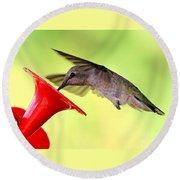 Fun Summer Hummingbird Round Beach Towel