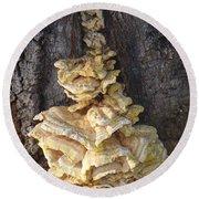 Fungi On Oak Round Beach Towel