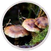 Fungus Among Us II Round Beach Towel