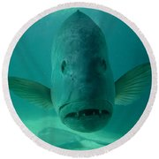 Funny Fish Face Round Beach Towel