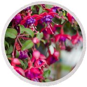 Fuchsia Spilling Over  Round Beach Towel