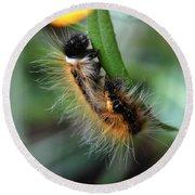 Fuzzy Caterpillar Round Beach Towel