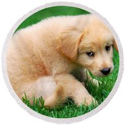 Fuzzy Golden Puppy Round Beach Towel