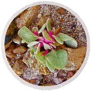 Fuzzy Plant On Blue Mesa Trail In Petrified Forest National Park-arizona  Round Beach Towel