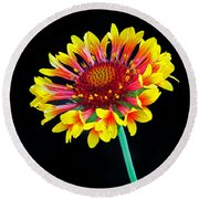 Gaillardia Arizona Sun Round Beach Towel