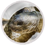 Galapagos Giant Tortoise V2 Round Beach Towel