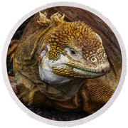 Galapagos Land Iguana  Round Beach Towel by Allen Sheffield